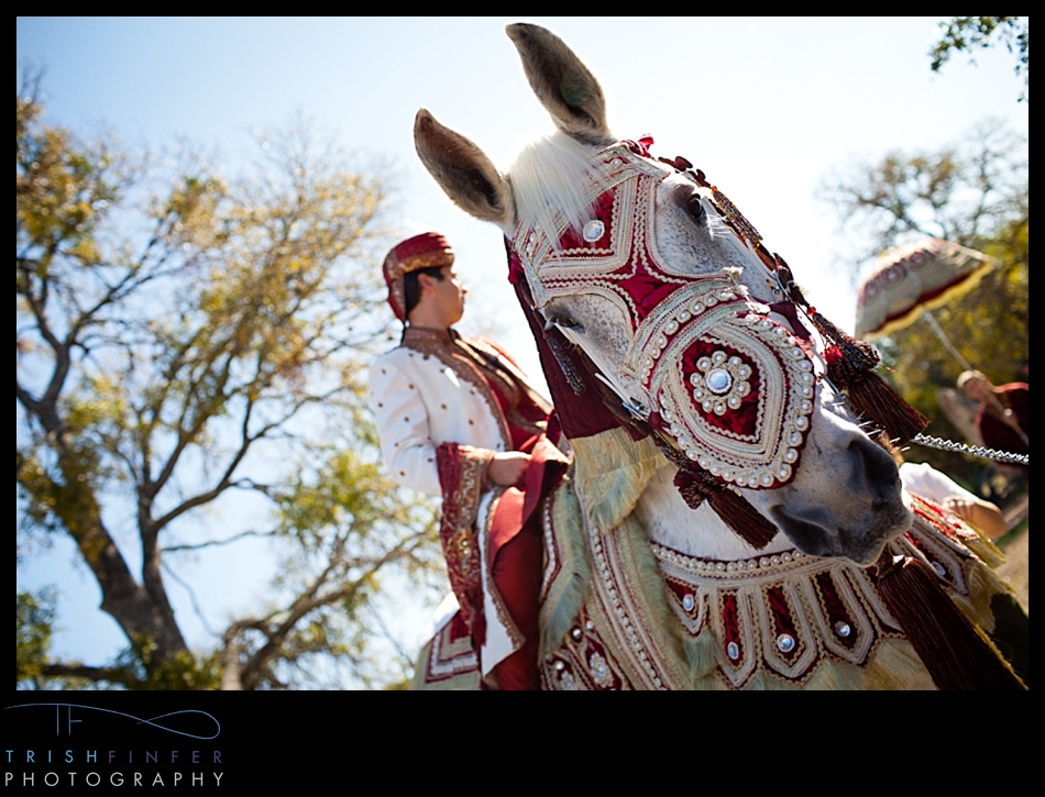 Baraat Horse Groom Hindu Wedding